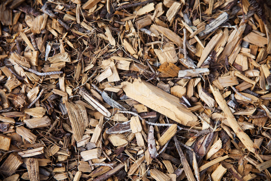 Top pine wood chips as mulch bark