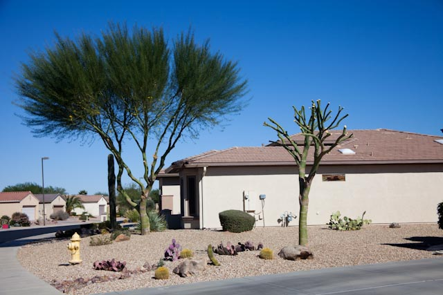 How much does it cost to have a Palo Verde tree trimmed ...